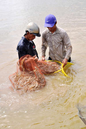 BAC LIEU, VIETNAM - NOVEMBER 22, 2012: Vietnamese farmers are harvesting shrimps from their pond with a fishing net and small baskets in Bac Lieu city