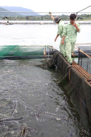 LAM DONG, VIETNAM - SEPTEMBER 2, 2012: Workers are feeding the farming sturgeon fish in cage culture in Tuyen Lam lake