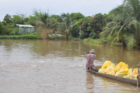 DONG THAP, VIETNAM - AUGUST 31, 2012: Farmers are feeding pangsius catfish in their pond in the mekong delta of Vietnam