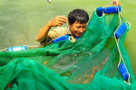 by cu: CU CHI, VIETNAM - AUGUST 5, 2011: Workers are catching Koi fish broodstocks from ponds to tanks