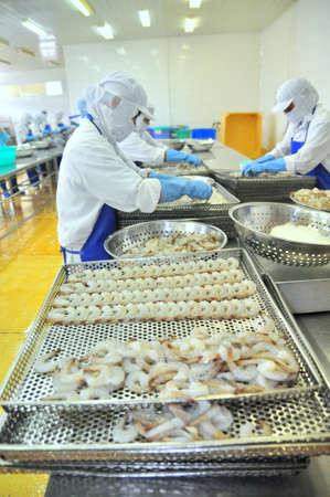 camaron: Tra Vinh, Vietnam - 19 de noviembre de 2012: Los trabajadores están reorganizando camarones pelados en una bandeja para poner en la máquina en una fábrica de congelados de mariscos en el delta del Mekong de Vietnam Editorial