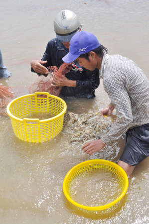 developing country: BAC LIEU, VIETNAM - NOVEMBER 22, 2012: Vietnamese farmers are harvesting shrimps from their pond with a fishing net and small baskets in Bac Lieu city