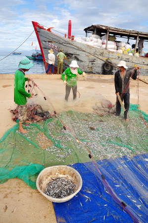 QUANG NGAI, VIETNAM - JULY 31, 2012: Fishermen are removing anchovies fish from their nets to start a new working day in Ly Son island