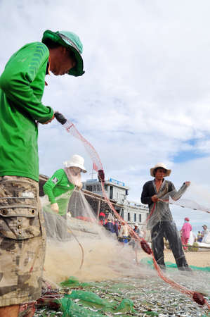 forage fish: QUANG NGAI, VIETNAM - JULY 31, 2012: Fishermen are removing anchovies fish from their nets to start a new working day in Ly Son island