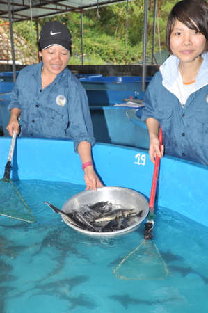 LAM DONG, VIETNAM - MAY 5, 2012: A sturgeon hatchery is being introduced to farmers in Tuyen Lam lake, Da Lat city 新聞圖片