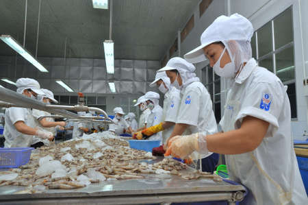countervailing duty: QUY NHON, VIETNAM - AUGUST 1, 2012: Workers are peeling fresh raw shrimps in a seafood factory in Quy Nhon city, Vietnam