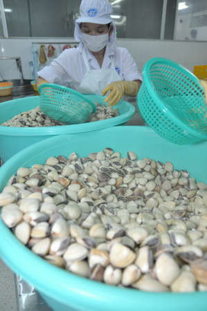 antidumping: TIEN GIANG, VIETNAM - SEPTEMBER 11, 2013: Clams are being washed and packaged in a seafood processing plant in Tien Giang, a province in the Mekong delta of Vietnam