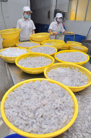 QUY NHON, VIETNAM - AUGUST 1, 2012: Shrimps are being peeled off and wash up before getting frozen in a seafood factory in Quy Nhon city, Vietnam