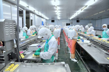 food industry: HO CHI MINH CITY, VIETNAM - OCTOBER 3, 2011: Workers are working hard on a production line in a seafood factory in Ho Chi Minh city, Vietnam