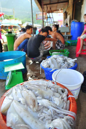 con dao: CON DAO, VIETNAM - JULY 2, 2012: Squids caught by local fishermen are for sale on the Con Dao island of Vietnam