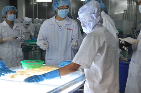 antidumping: PHAN THIET, VIETNAM - DECEMBER 11, 2014:  Workers are testing the color of squids for exporting in a seafood factory in Vietnam