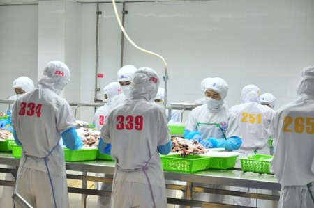 classifying: VUNG TAU, VIETNAM - DECEMBER 9, 2014: Workers are classifying octopus for exporting in a seafood processing factory