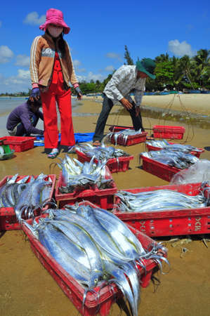 forage fish: LAGI, VIETNAM - FEBRUARY 26, 2012: Local fishermen are selling their fishes to the locals and tourists on the Lagi beach