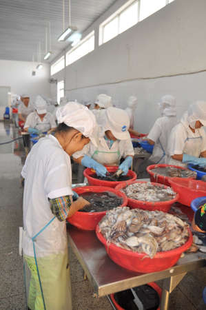 VUNG TAU, VIETNAM - SEPTEMBER 28, 2011: Workers are classifying raw fresh octopus to transfer to the next step of processing line in a seafood factory in Vietnam Éditoriale