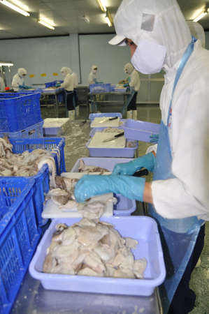 antidumping: HO CHI MINH CITY, VIETNAM - OCTOBER 3, 2011: Workers are cutting raw fresh octopus in a seafood factory in Ho Chi Minh city, Vietnam