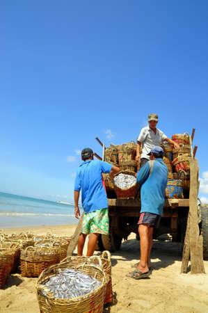 fischerei: LAGI, VIETNAM - FEBRUARY 26, 2012: Local fishermen are uploading fisheries onto the truck to the processing plant in Lagi beach
