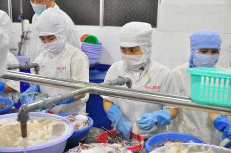 PHAN THIET, VIETNAM - DECEMBER 11, 2014: Workers are peeling squids for exporting in a seafood factory in Vietnam