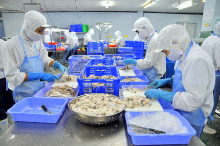 호치민 시티, 베트남 - 2011 년 10 월 3 일 : 노동자 호치민시, 베트남 해산물 공장 원시 신선한 낙 지 절단됩니다