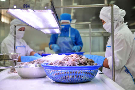antidumping: VUNG TAU, VIETNAM - DECEMBER 9, 2014: Workers are classifying octopus for exporting in a seafood processing factory