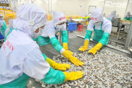 antidumping: PHAN RANG, VIETNAM - DECEMBER 29, 2014: Workers are arranging shrimps in a line to the freezing machine in a seafood factory in Vietnam