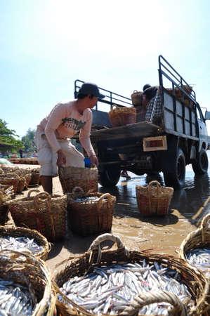 fischerei: LAGI, VIETNAM - 26. Februar 2012: Die einheimischen Fischer sind Fischerei Hochladen auf den LKW zum Verarbeitungsbetrieb in Lagi Strand