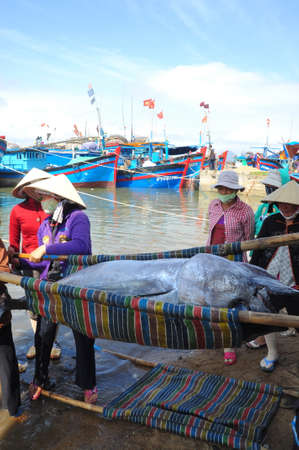 TUY HOA, VIETNAM - FEBRUARY 28, 2012: Local fishermen are transporting tuna fish from their vessels to the stretcher and bring it to the testing house in Tuy Hoa seaport 新聞圖片