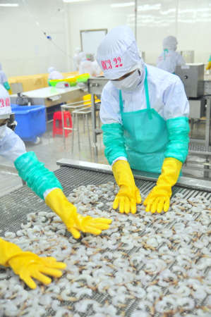 PHAN RANG, VIETNAM - DECEMBER 29, 2014: Workers are arranging shrimps in a line to the freezing machine in a seafood factory in Vietnam