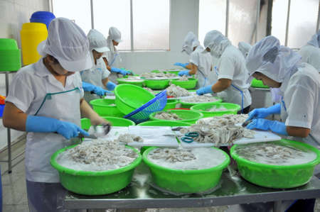 classifying: VUNG TAU, VIETNAM - SEPTEMBER 28, 2011: Workers are classifying raw fresh octopus to transfer to the next step of processing line in a seafood factory in Vietnam Editorial