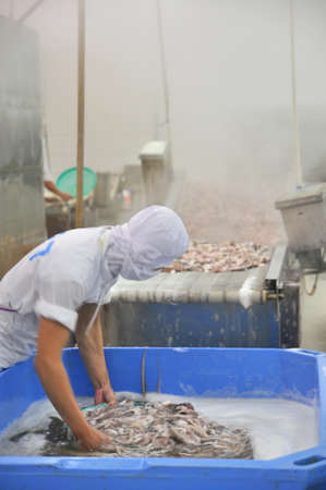 antidumping: VUNG TAU, VIETNAM - DECEMBER 9, 2014: A worker is boiling octopus before transferring to process for exporting in a seafood factory Editorial