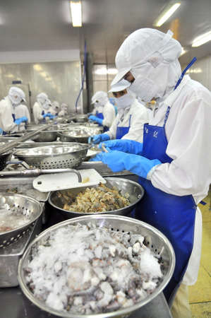 antidumping: TRA VINH, VIETNAM - NOVEMBER 19, 2012: Workers are peeling and processing fresh raw shrimps in a seafood factory in the Mekong delta of Vietnam