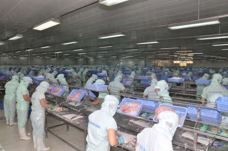 antidumping: AN GIANG, VIETNAM - SEPTEMBER 12, 2013: Workers are filleting of pangasius catfish  in a seafood processing plant in An Giang, a province in the Mekong delta of Vietnam Editorial