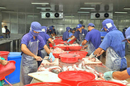 AN GIANG, VIETNAM - DECEMBER 26, 2012: Vietnamese workers are filleting pangasius fish in a seafood processing plant in the mekong delta