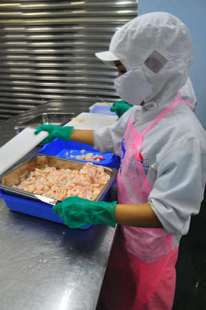 antidumping: HO CHI MINH CITY, VIETNAM - OCTOBER 3, 2011: Shrimps are being peeled and ready to be steamed in a seafood factory