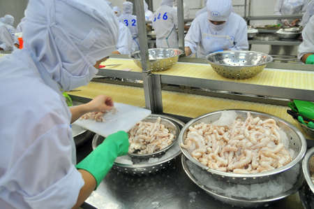 VUNG TAU, VIETNAM - DECEMBER 9, 2014: Workers are cutting octopus for exporting in a seafood processing factory Editorial