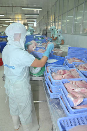 countervailing duty: AN GIANG, VIETNAM - SEPTEMBER 12, 2013: Workers are weighing of pangasius catfish fillet  in a seafood processing plant in An Giang, a province in the Mekong delta of Vietnam