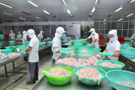 countervailing duty: AN GIANG, VIETNAM - DECEMBER 26, 2012: Vietnamese workers are sorting pangasius fish after filleting in a seafood processing plant in the mekong delta