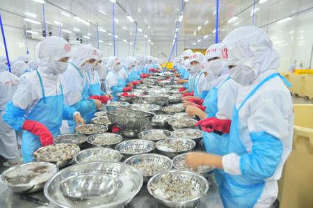 박란 (Phan Rang), 베트남 - 2014 년 12 월 29 일 : 베트남 해산물 공장에서 신선한 생 새우를 껍질을 벗기고 가공하는 중입니다. 에디토리얼