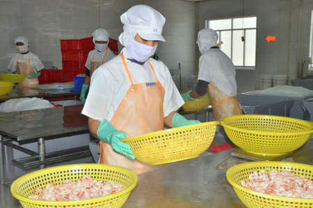 grading: NHA TRANG, VIETNAM - MARCH 5, 2012: Workers are grading shrimps in a seafood factory in Vietnam