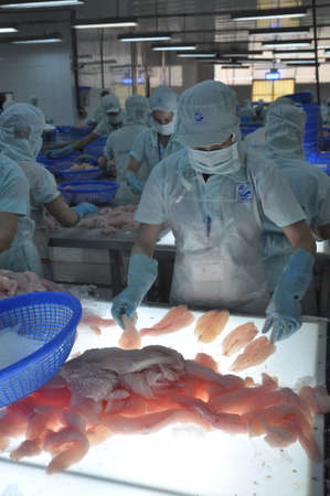 countervailing duty: AN GIANG, VIETNAM - SEPTEMBER 12, 2013: Workers are testing the color quality of pangasius fish fillets in a seafood processing plant in An Giang, a province in the Mekong delta of Vietnam