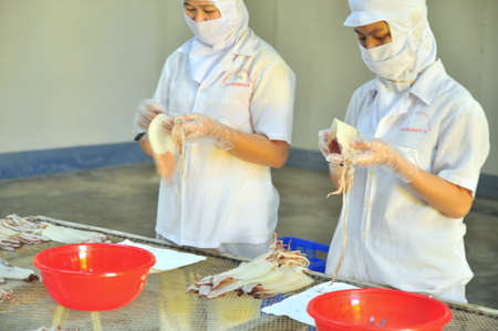 PHAN THIET, VIETNAM - DECEMBER 11, 2014: Workers are peeling dry squids for exporting in a seafood factory in Vietnam