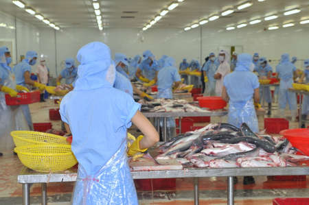 countervailing duty: TIEN GIANG, VIETNAM - MARCH 2, 2013: Workers are filleting pangasius fish in a seafood processing plant in Tien Giang, a province in the Mekong delta of Vietnam