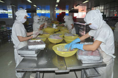 countervailing duty: NHA TRANG, VIETNAM - MARCH 5, 2012: Workers are selecting pangasius fillet to put to the freezing machine in a seafood factory in Vietnam