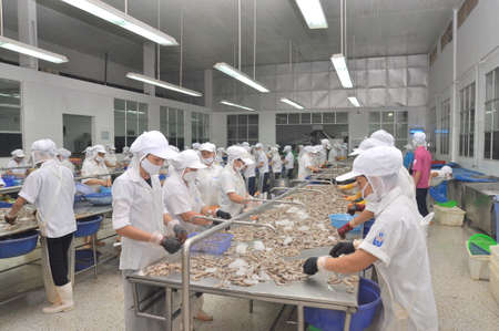 QUY NHON, VIETNAM - AUGUST 1, 2012: Workers are peeling fresh raw shrimps in a seafood factory in Quy Nhon city, Vietnam