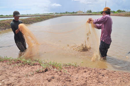 BAC LIEU, VIETNAM - NOVEMBER 22, 2012: Fishermen are harvesting shrimp from their pond by fishing nets in Bac Lieu city Éditoriale
