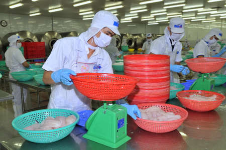 countervailing duty: TIEN GIANG, VIETNAM - MARCH 2, 2013: Workers are weighing pangasius fish fillets in a seafood processing plant in Tien Giang, a province in the Mekong delta of Vietnam