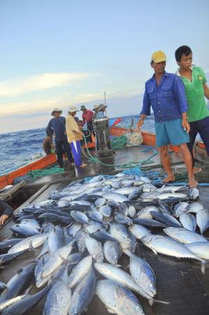 shrimp boat: NHA TRANG, VIETNAM - MAY 5, 2012: Fishermen are collecting tuna fish caught by trawl nets in the sea of the Nha Trang bay Editorial