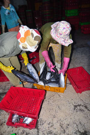 forage fish: NHA TRANG, VIETNAM - FEBRUARY 21, 2013: Women workers are collecting and sorting fisheries into baskets after a long day fishing in the Hon Ro seaport, Nha Trang city