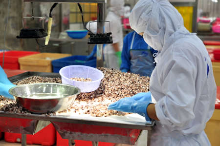 antidumping: VUNG TAU, VIETNAM - DECEMBER 9, 2014: Workers are testing the quality of octopus for exporting in a seafood processing factory
