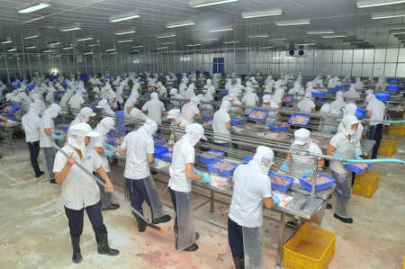 antidumping: AN GIANG, VIETNAM - DECEMBER 26, 2012: Vietnamese workers are filleting pangasius fish in a seafood processing plant in the mekong delta
