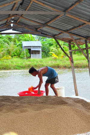 pangasius: AN GIANG, VIETNAM - AUGUST 25, 2011: A farmer is preparing to feed pangasius catfish in his farm pond Editorial